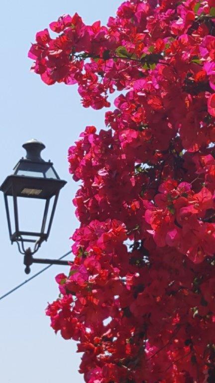 Fiori di Sanremo